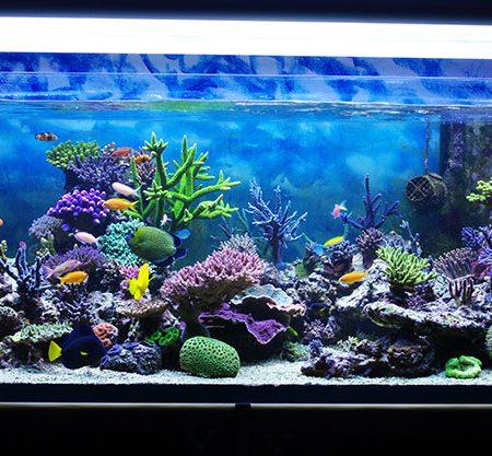 Ibipienso tienda de accesorios para animales y mascotas for Accesorios para acuarios marinos